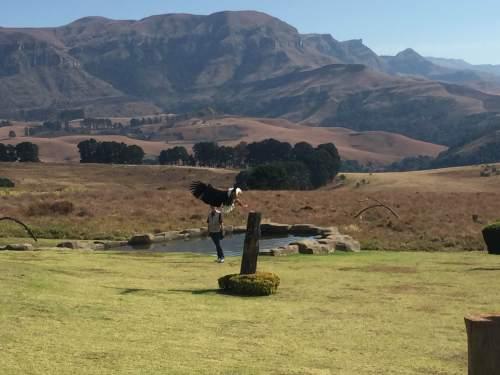 Falcon Ridge Drakensberg show