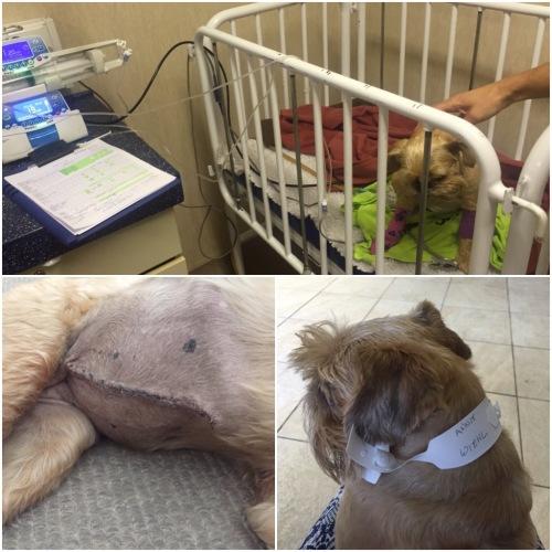 Animal hospital stitches operation